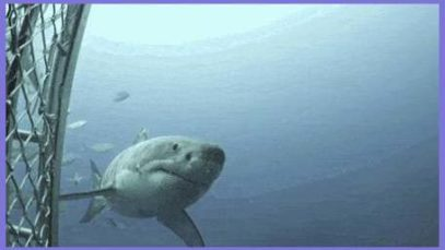 Intense battle scares on a Great White warrior spotted near Neptune Islands