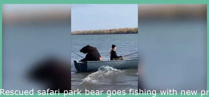 Rescued safari park bear goes fishing with new owner in Novosibirsk, Russia
