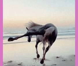 Full beast mode! This horse on a beach in Morocco and the smooth cinematographer who captured her