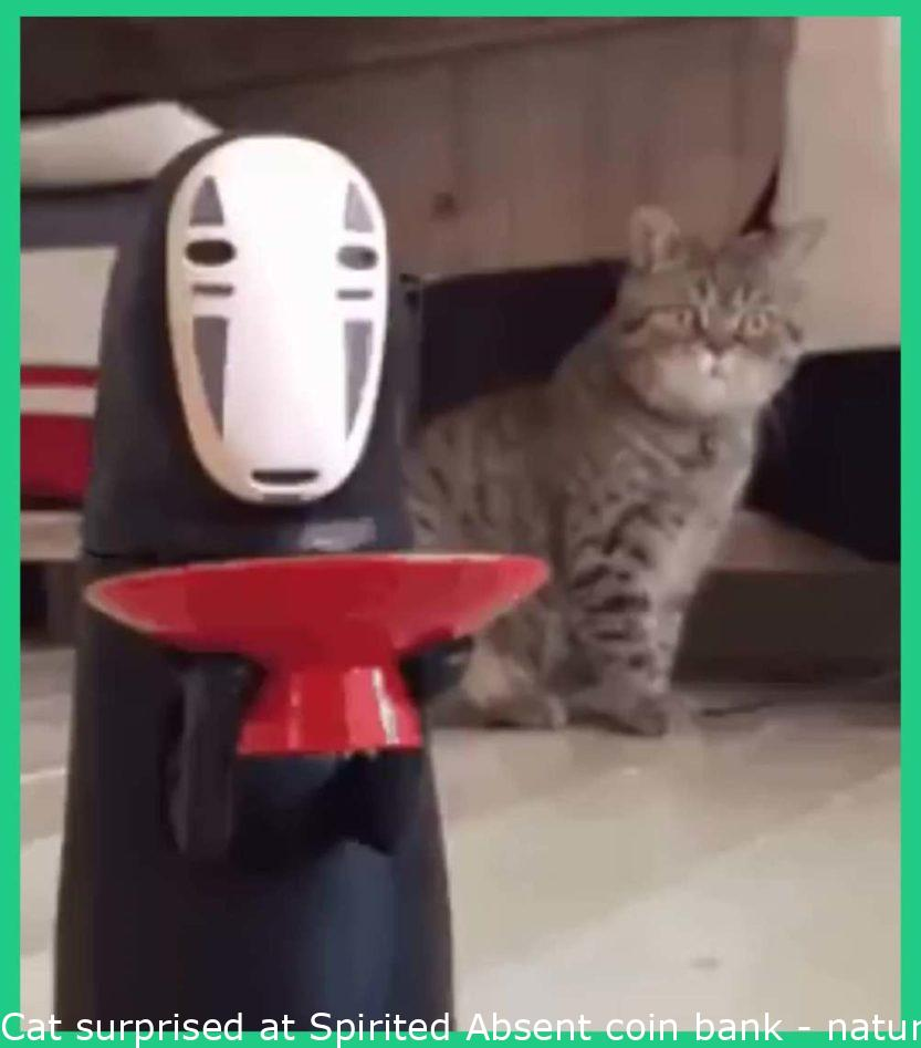 Cat amazed at Spirited Away coin bank